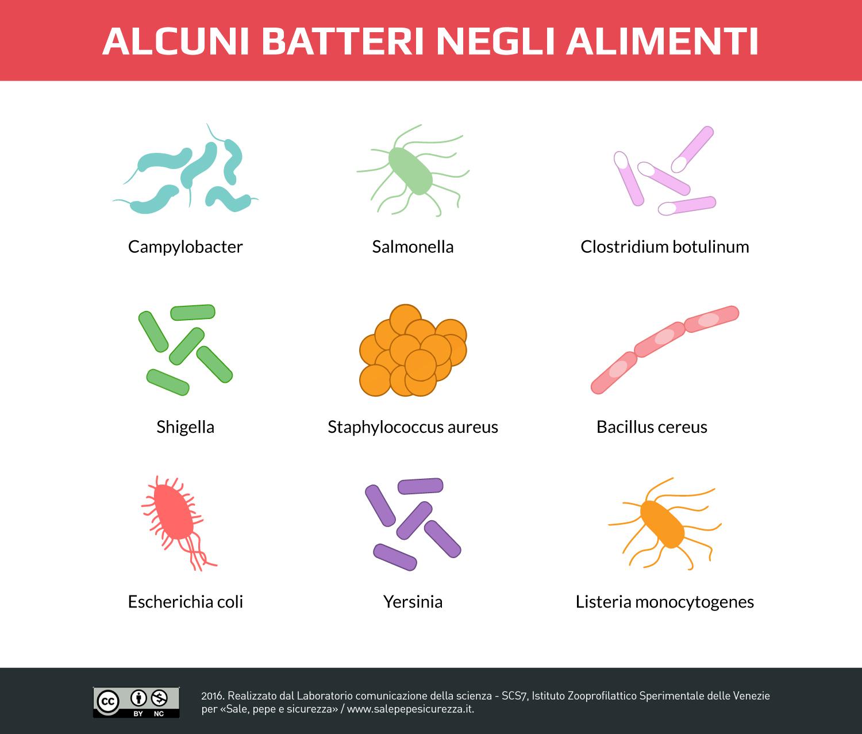 Principali batteri negli alimenti