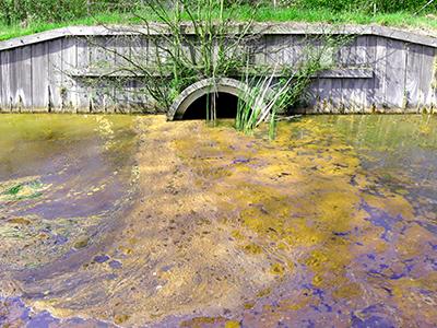 Inquinanti ambientali