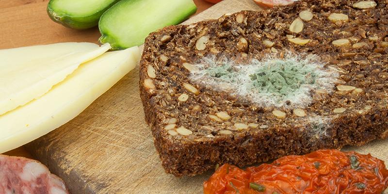 Rischio biologico nell'alimentazione: introduzione