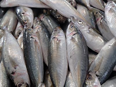 Istamina nel pesce e sindrome sgombroide