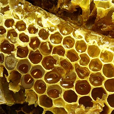 Favo e miele