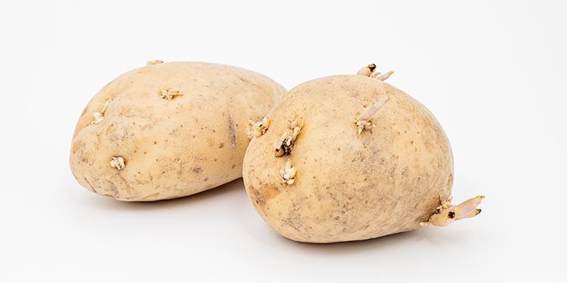 Solanina & Co: i glicoalcaloidi delle patate