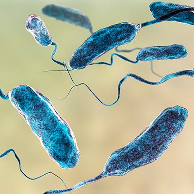 Vibrione del colera, vibrio cholerae