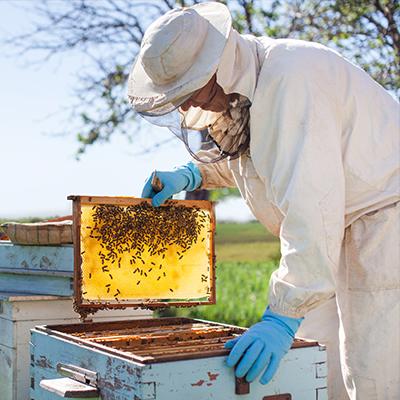 apicoltore produttore di miele