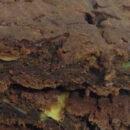 Brownies al cioccolato con avocado [Ricetta]