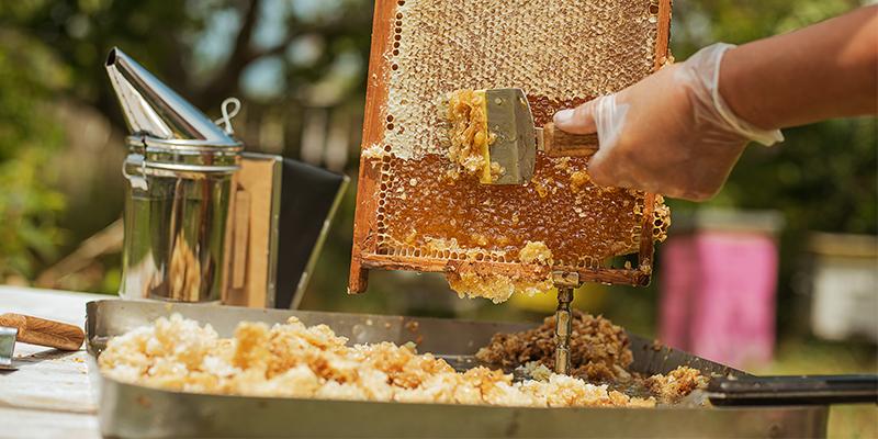 Come viene prodotto il miele in apicoltura?