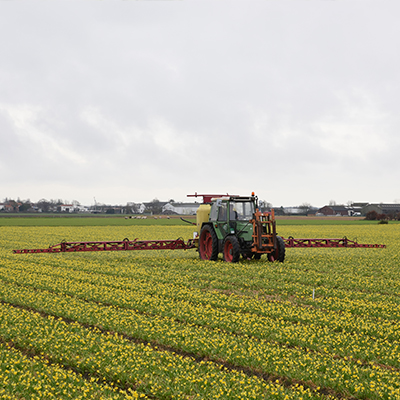 Campi irrigati, residui fitofarmaci